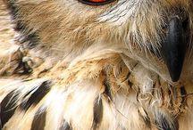 Owls  / by AbbeyBeast