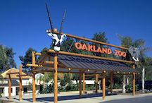 'Things To Do Oakland CA' / by Hotels in Oakland CA