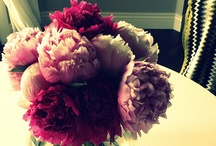 Flowers / by Sara Danielson