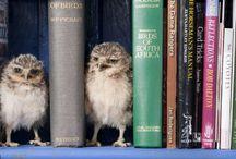 Owl love <3 / by Kimberly Thomas