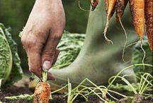 gardening / by Terrie Badger