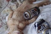 Drunk Cats / by Petsami