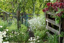 Great and Gorgeous Gardening / Beautiful Gardens,Gardening ideas and tips ,and organic gardening  / by Jen Rizzo