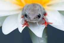 Cool Images - Animals / by Rikki Emory