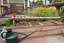 Gardening / by Pine Tree Village