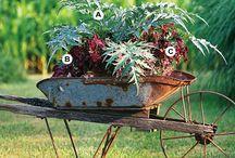 Life began in a Garden.... / by Debbie Turner