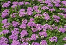 Flower Garden ⚘ / To plant a garden is to believe in tomorrow... / by April Steele