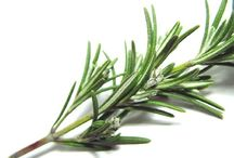 Herbs, Herbs, Glorious Herbs / by Carlene Deutscher
