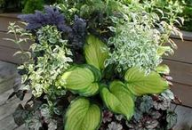 Gardening / by Hess Family