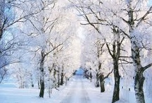 Winter Bliss / by Scarlett White