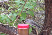 Hummingbirds / by Rosanna LaBonte