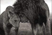 Amazing Animals / by DashBurst