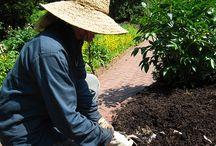 Gardening Tips / by Brooklyn Botanic Garden