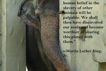Animal Slavery / by Animals Voice
