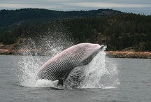 Whale whale whale what do have here?! / by Kimmy Fairbaugh