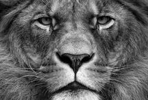 Heart of a Lion / by Sarah Johnson