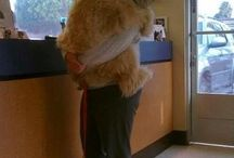 Animals have the biggest hearts... / by Giovanna Scichilone Fullerton