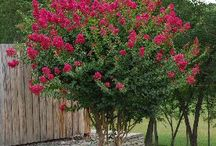 Farm Flowerbed Plants / by Christine E Stout