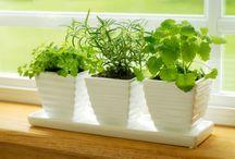 Indoor gardening / by Judy McCoy