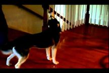 Funny Dog Videos / A great collection of funny dog videos. / by John Baril