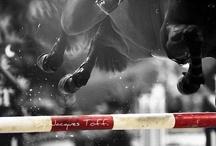 Horsey fun / by Lysah Caplan
