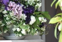mon bouquet du jour / by Sharon Santoni