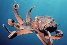 Octopus Love / by Adena DeMonte