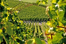 VINEYARDS; WINE; ANCIENT TO MODERN / by Elaine Howard