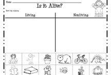1st Grade Science/SS / by Whitney Plunkett