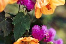 Flowers/Plants / by Jessica Smith