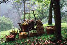 Our farm dream / by Joleen Bennett