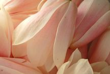 Edible flowers / by Tamara Barker