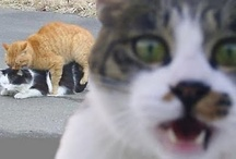 Photobombs / by Funny Humor Clips