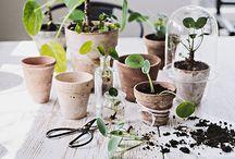 plants + greenery / by Lorna