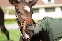 Racing horses  / by Sena Jodoin