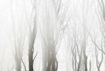 In To The Woods / by Fanie Cronje