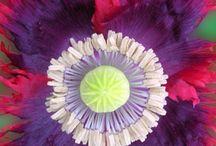 fantastic flowers / by Lynn Lee 2.0