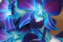 Blue Velvet / by Shirlee Harris