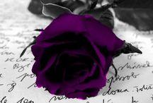 Purple luv / by Angela Pledger