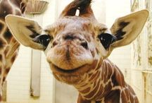 this is why giraffes are freaky / by Kelly Rhone