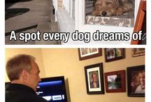 Dogs / by Jennifer Dickerson