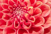 Plantae / by Kathy Prejean