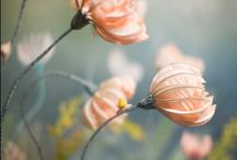 Petals & Posies / by < Hannah >