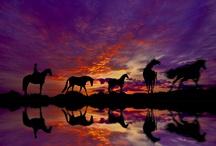 Horses / by Dale Bernard