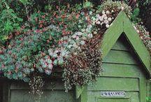 Garden Ideas / by Rowena P