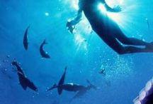 Diving bucket list / by Vicki Stepanenko