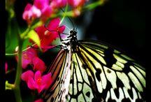 Butterflies / by Toni Lange