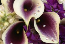 Wedding flowers / by Erin Tamucci