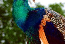 Birds Of A Feather / by Jami Myatt