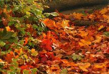 4 seasons: fall / autumn / by Marina
